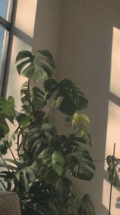Phone Capture Tree Aesthetic Wallpaper