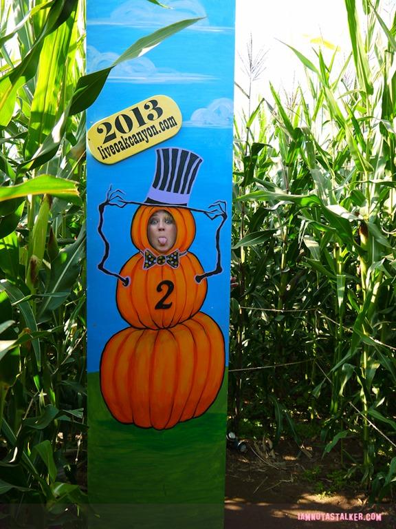 Live Oak Canyon Pumpkin Patch IAMNOTASTALKER