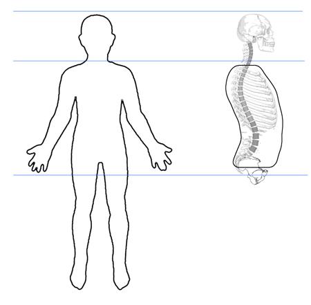 yoga_anatomy_torso01