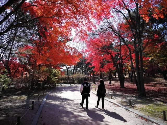 autumn-in-Seoul