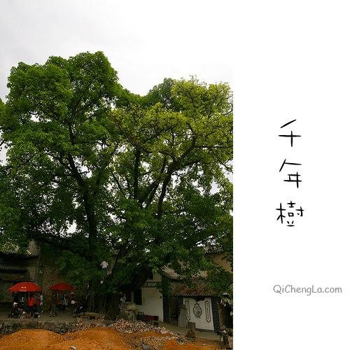 Yunnan-36