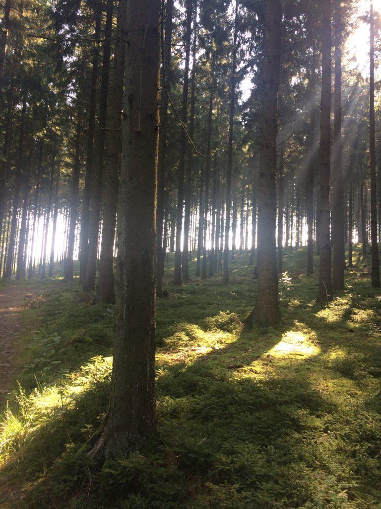 Ochtendwandeling door het bos