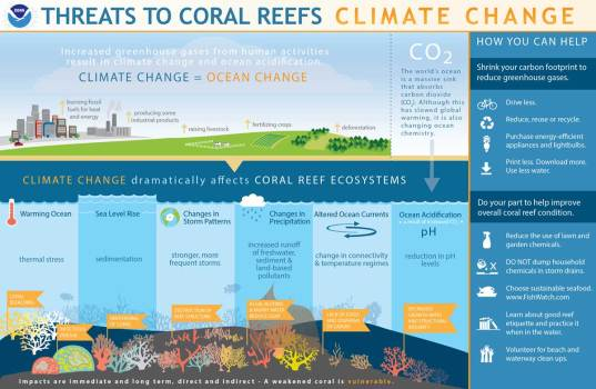 This image has an empty alt attribute; its file name is coralreef-climate-details-1-1024x667.jpg