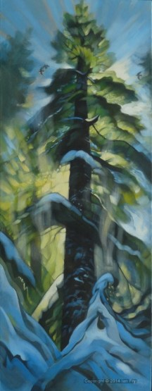 Big fir in snow . Sold