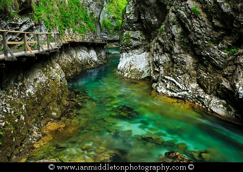 Blejski Vintgar gorge, Gorje, near Bled, Slovenia. The 1.6 km long Vintgar gorge has been carved through the vertical rocks of the Hom and Bort hills by the Radovna River.