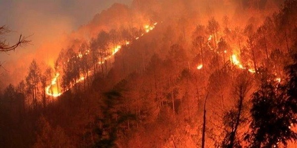 forest fires in india and its management upsc essay notes mindmap
