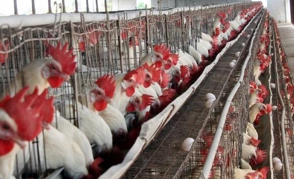 bird flu upsc essay notes mindmap