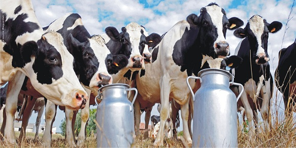 Dairy Sector in India – Evolution, Challenges and Way Forward