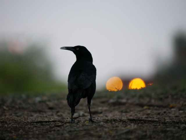 sunset bird animal grass
