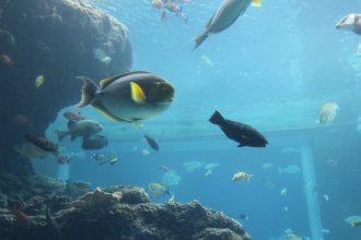 沖縄の海の魚がいっぱい