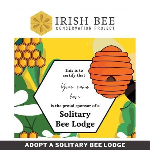 Adopt A Solitary Bee Lodge