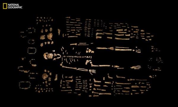 Esqueleto compuesto de H.naledi. / Robert Clark/National Geographic