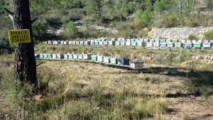 Organic viticulture bees