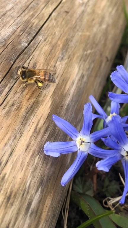 Vad gör bin