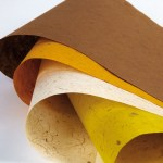 Banana Tree Paper Selections