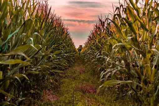 Global Agricultural Chemical Manufacturer