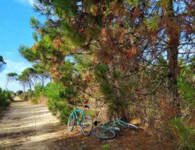 escursione-in-bici-san-rossore