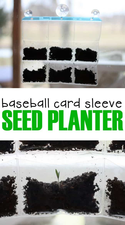 Baseball Card Sleeve Seed Planter