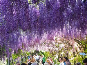 Visit the blooming gardens of Florence in the spring