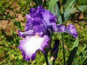 Visita los florecientes jardines de Florencia en la primavera.