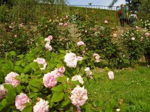 Visitez les jardins fleuris de Florence au printemps