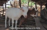 The Gift of a Goat in Malawi