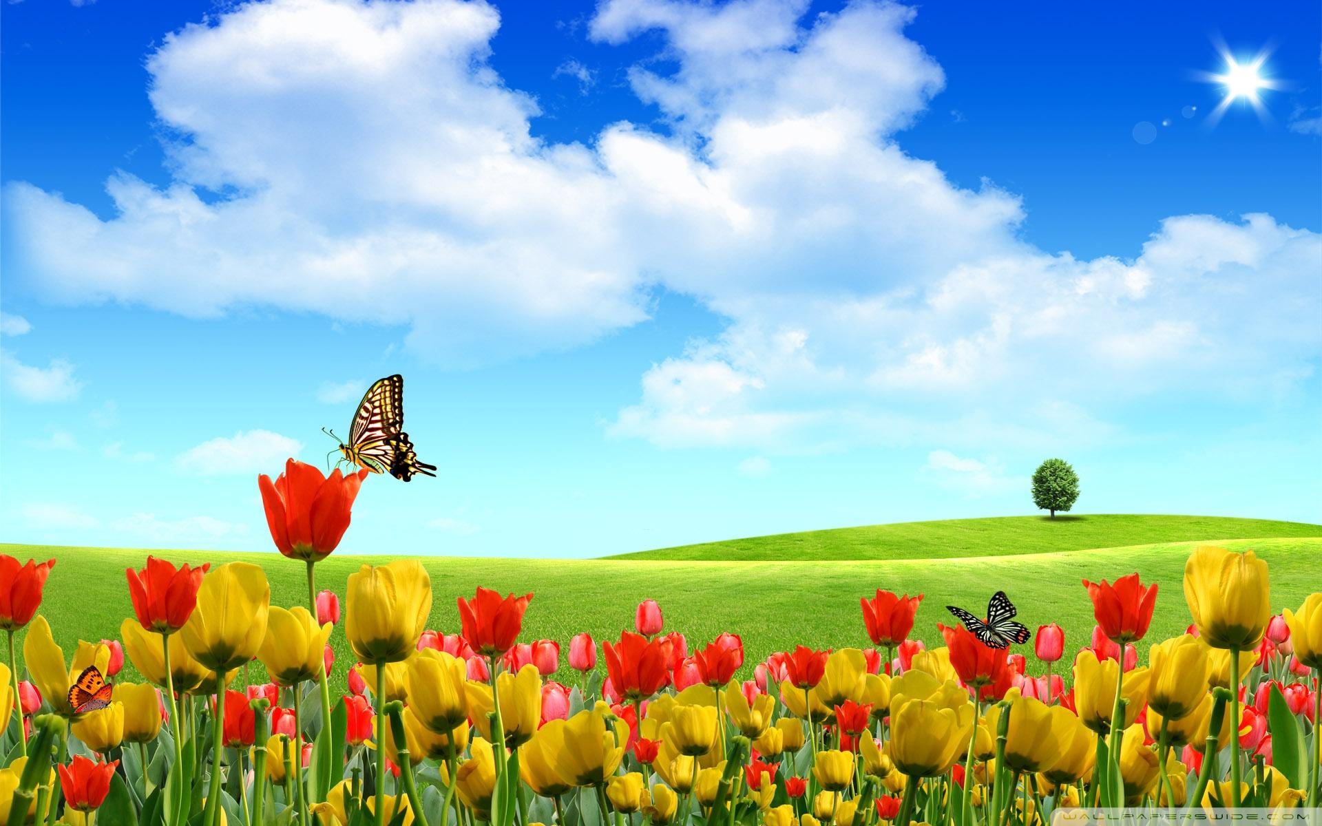 6940 Spring Wallpaper Widescreen Desktop Wallpaper 1920x1200