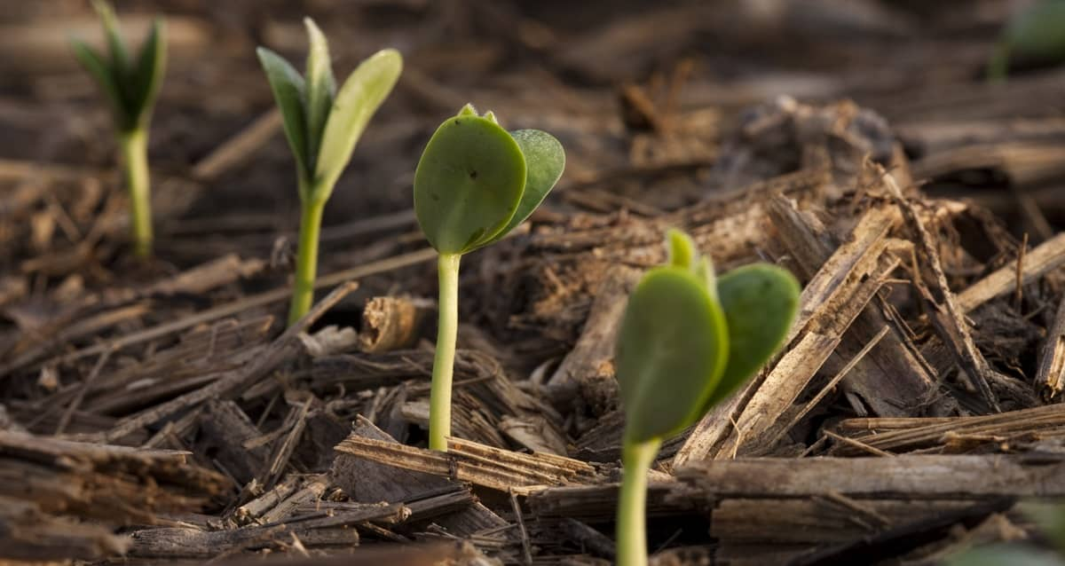 growth shoots