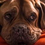 Toxic Treats lead to porky pets