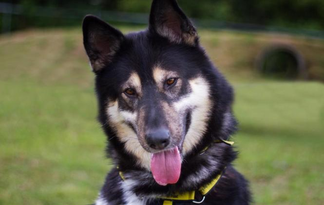 dogs, trust, snetterton, rehoming, appeal, norfolk