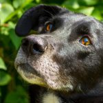 Overlooked Dogs Await 'Yappy' Endings After 1,700 Days In Kennels
