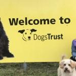 Miss Teen Norfolk Galaxy Visits Dogs Trust Snetterton
