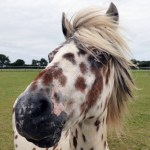 Help Grant A Rescued Horse's Wish This Christmas