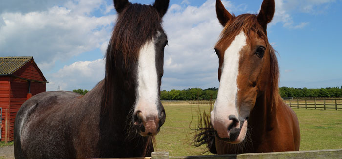 Young horse fans can enjoy an exciting peek into the world of Redwings Horse Sanctuary