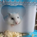 Top Tips to Care For Your Pet Hamster