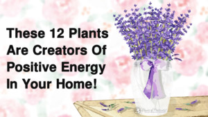 These-12-Plants-Are-Creators-Of-Positive-Energy-In-Your-Home-1-300x169