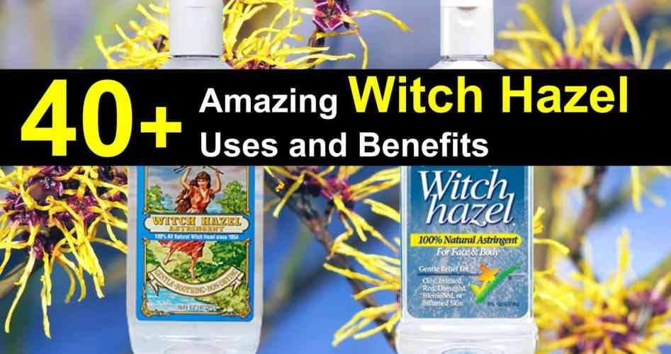 witch-hazel-uses-titlimg-3