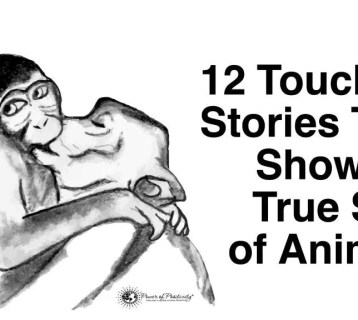 animal-soul-stories-1024x576