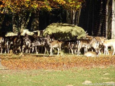 Herbstouren_Tag2- (4 von 17)