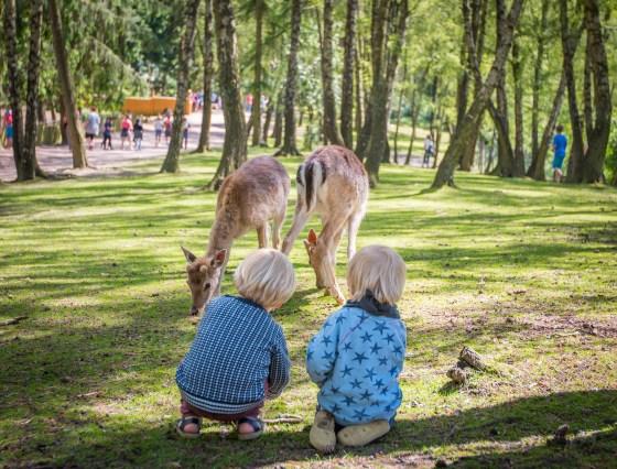 Tierpark Lüneburgerheide