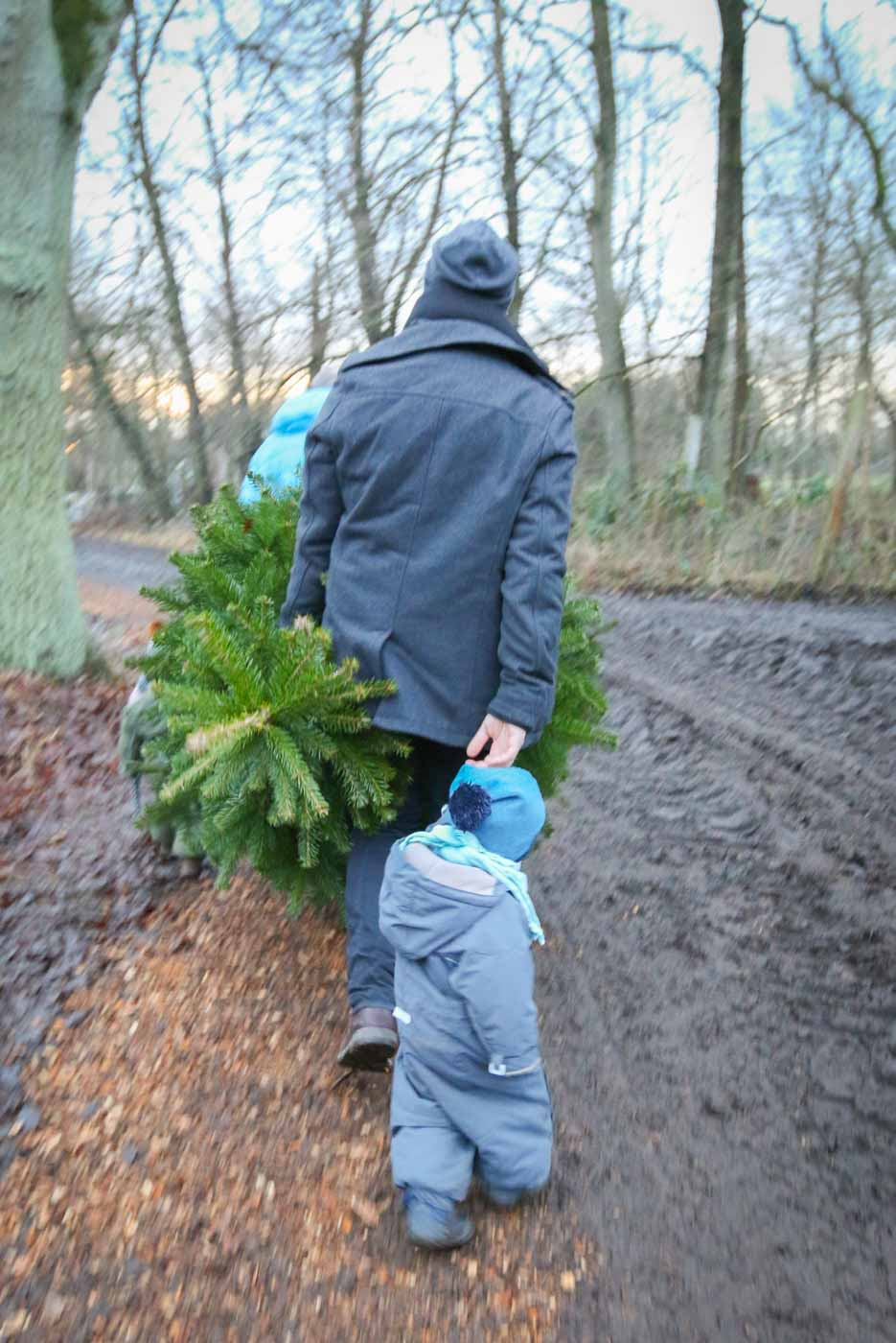 Tannenbaum schlagen mit Kinderprogramm in der Nähe von Hamburg. Unser Tipp ist der Tannenhof Bornholdt in Lutzhorn beim Elmshorn | Ichsowirso.de