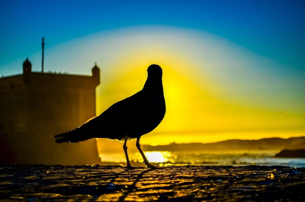 Essaouira maroc rempart