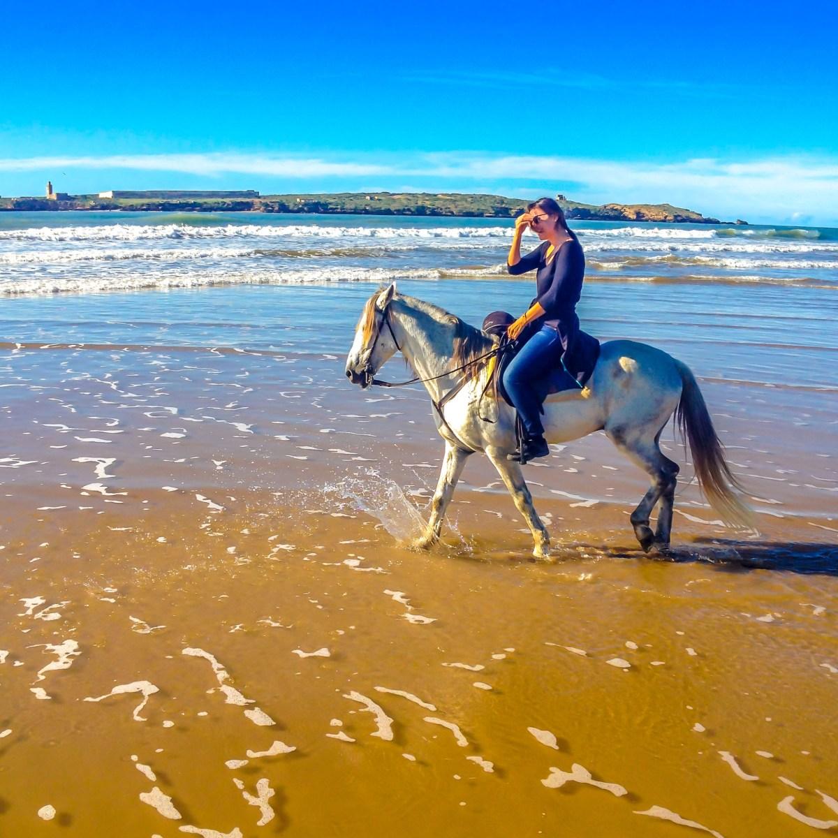 Zouina cheval Essaouira maroc