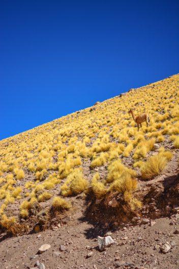 que faire dans le nord du chili blog voyage