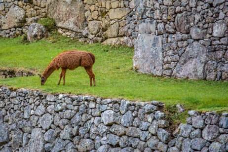 Machu Picchu Pérou Peru Agua Calientes amérique du sud blogvoyage blog voyage icietlabas (32)