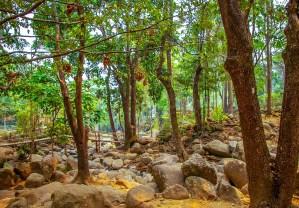 Lamnam Kok National Park Mae Salong Chiang Rai Thailand blogvoyage blog voyage icietlabas