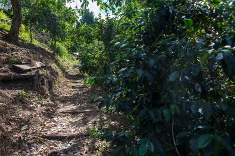 Finca Momota Cafetera Saleto Colombie Blog Voyage-9