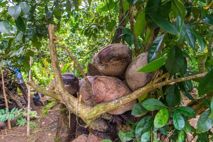 Bahia Solano Colombie Region Choco Blog Voyage