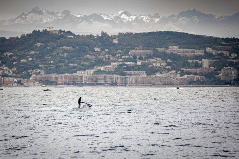 Premier weekend de Déconfinement Mini Randonnée Théoule-Sur-Mer blog voyage