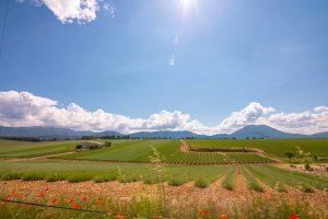 Alpes-de-Haute-Provence sur la route et premières découvertes blog voyage